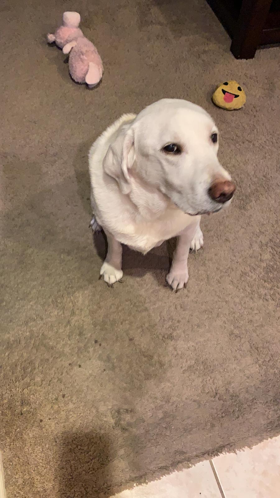 Dog giving sideeye