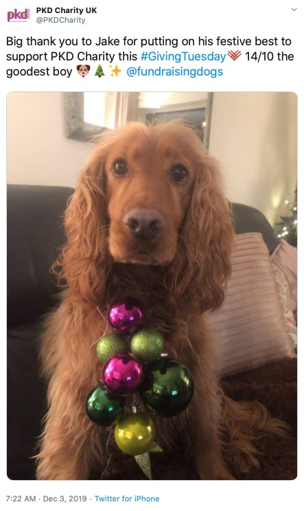 Screengrab of a tweet from PKD Charity saying Big thank you to Jake for putting on his festive best to support PKD Charity this GivintTuesday, 14 of 10 the goodest boy. A photo of a perplexed looking dog with christmas baubles hanging from his collar is attached